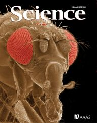 La mosca Drosophila, portada de la revista Science.