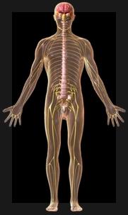 Dejar de disociar el cerebro del resto del cuerpo: uno de los aspectos más interesantes de la UKDP .